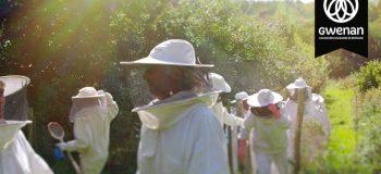 Gwenan - ruches - Ouest Valorisation