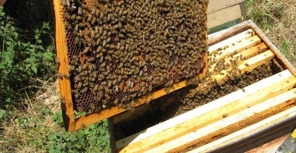 Ouest-Valorisation : partenariat Un toit pour les abeilles